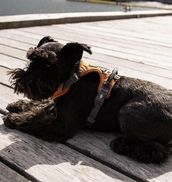 DOG Copenhagen Comfort Walk Pro sele